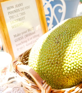 Massive Jackfruit weighing over 18 pounds!